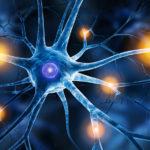 Schmerzgedächtnis: Nervenzellen erinnern sich